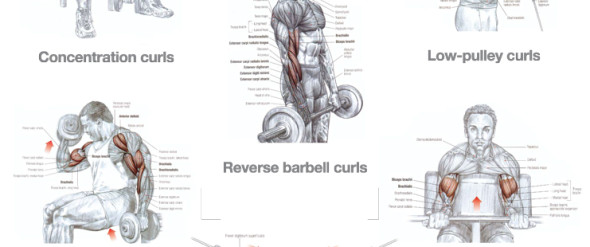 Back Traps And Biceps Workout