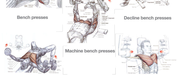 Triceps And Chest Workout Examples