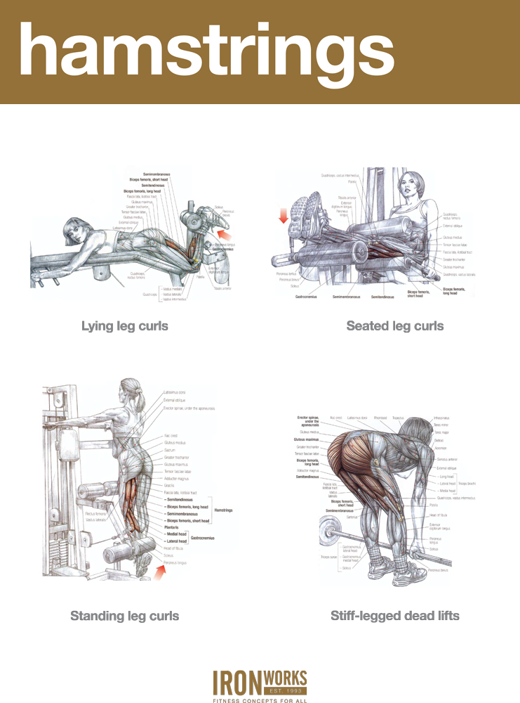 Hamstring workout. AA | Working Out The Kinks. | Pinterest