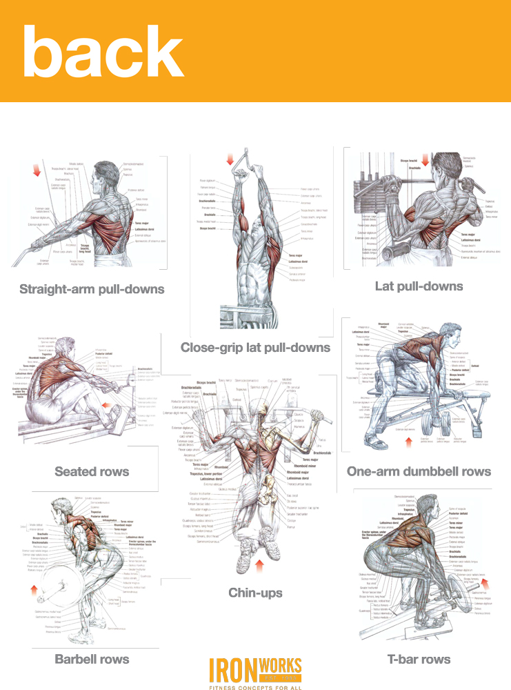Blogarticleback Traps And Biceps Workout 37 - Iron Works