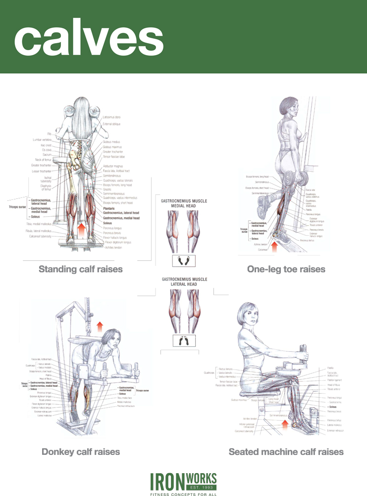 Blogarticlehamstrings And Calves Workout Examples 40