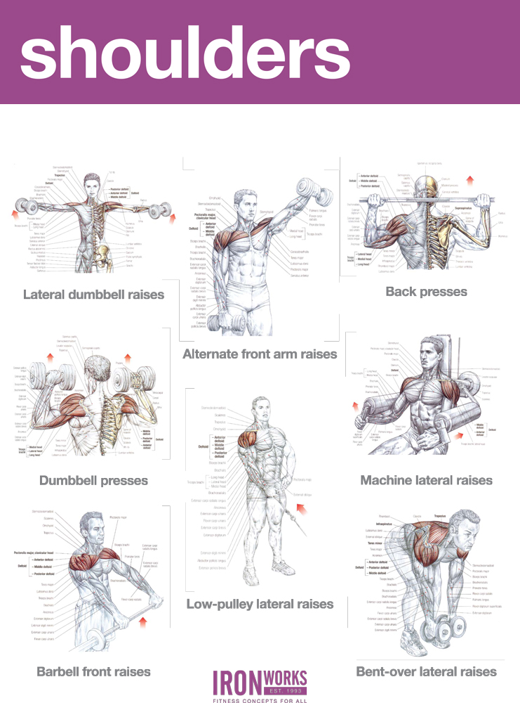 Blogarticleabs And Shoulders Workout Examples 41 - Iron ...