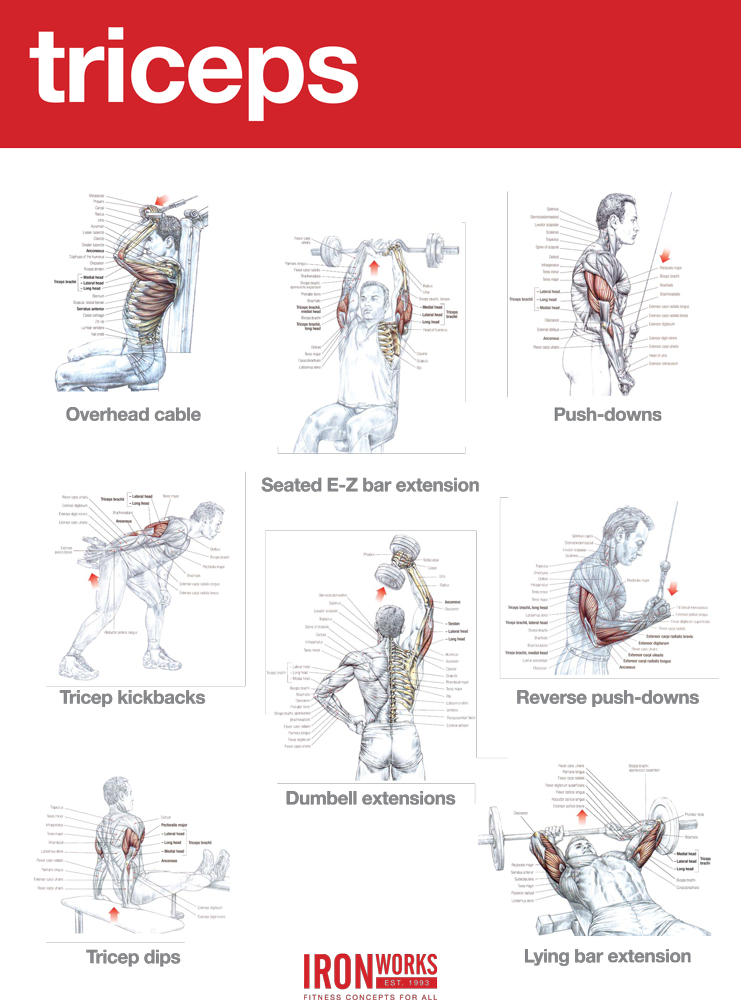 Triceps Workout At Gym Images | Workout Everydayentropy.Com