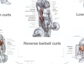 BACK, TRAPS AND BICEPS WORKOUT